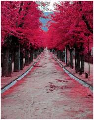 burgundy street madrid spain