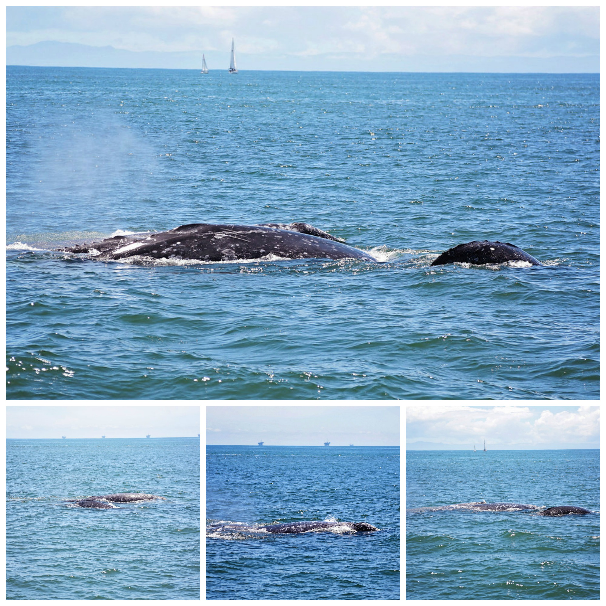 whale watching condor express santa barbara seasick these are your days making memories